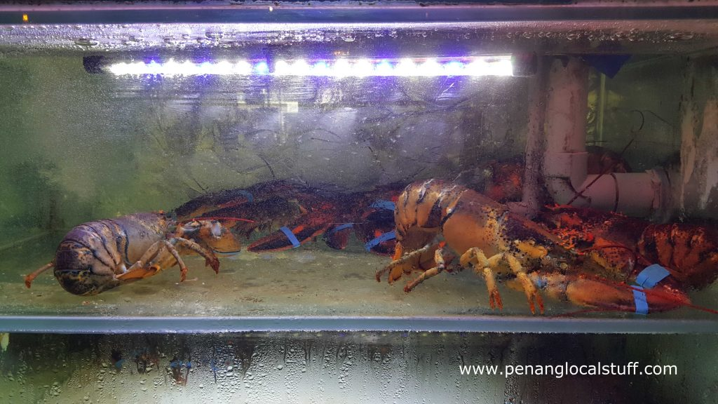 Live Lobsters At Paper Lobster