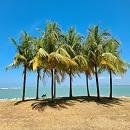 Quayside Coconut Trees