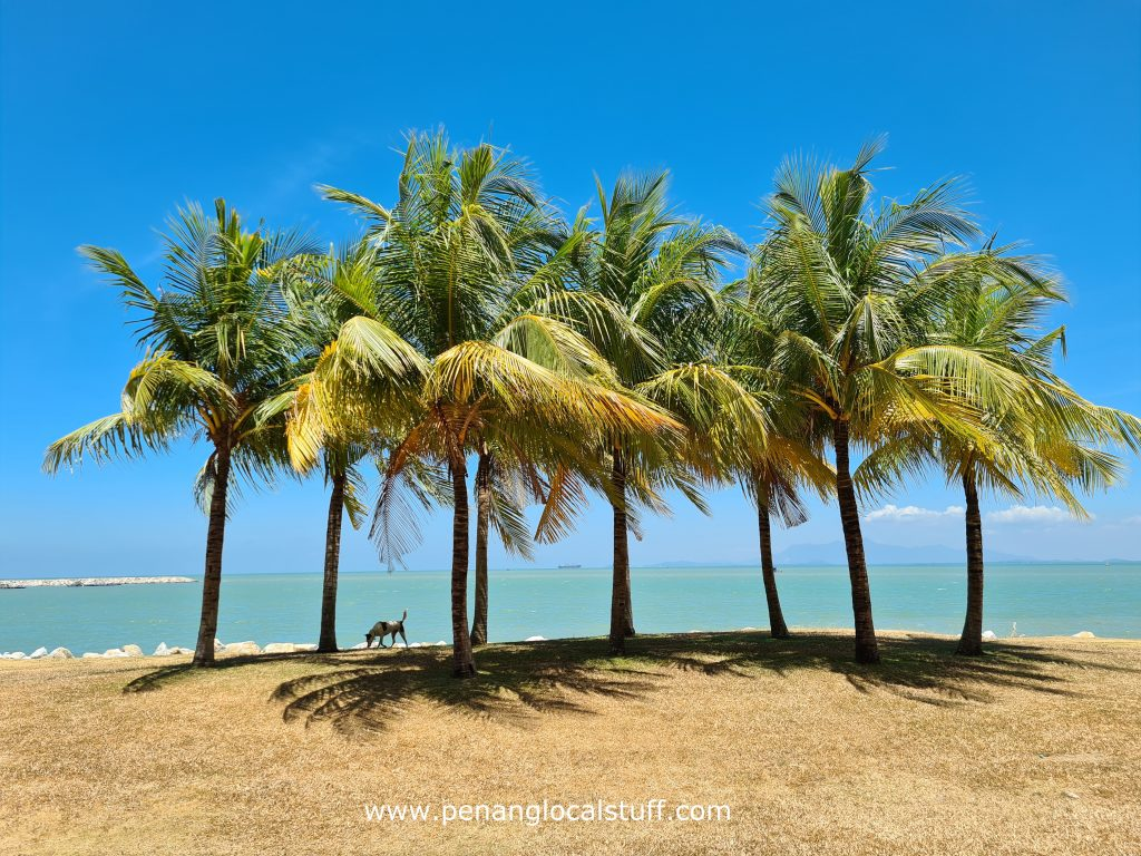 Straits Quay Coconut Trees